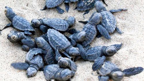 Participamos en la conservación de la Tortuga Boba