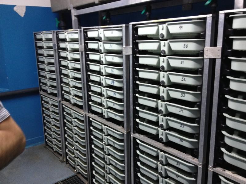 Sistema de incubación vertical para una conocida sociedad de pescadores de Asturias