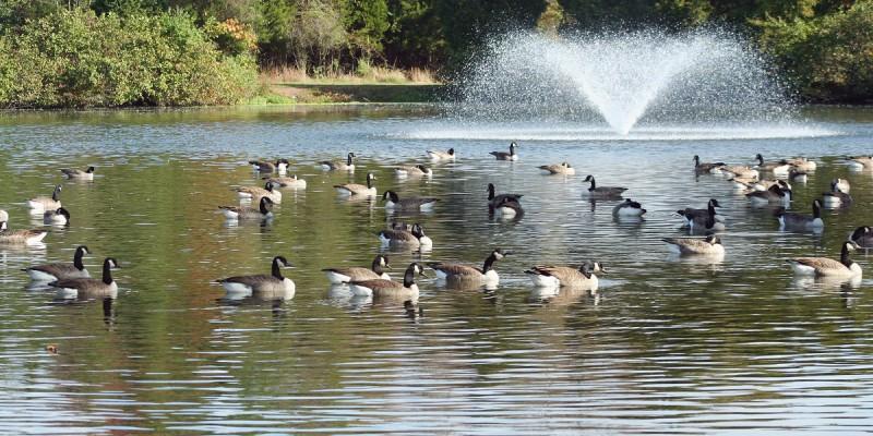 Aireación de estanques de campos de golf, balsas de riego y estanques de jardín