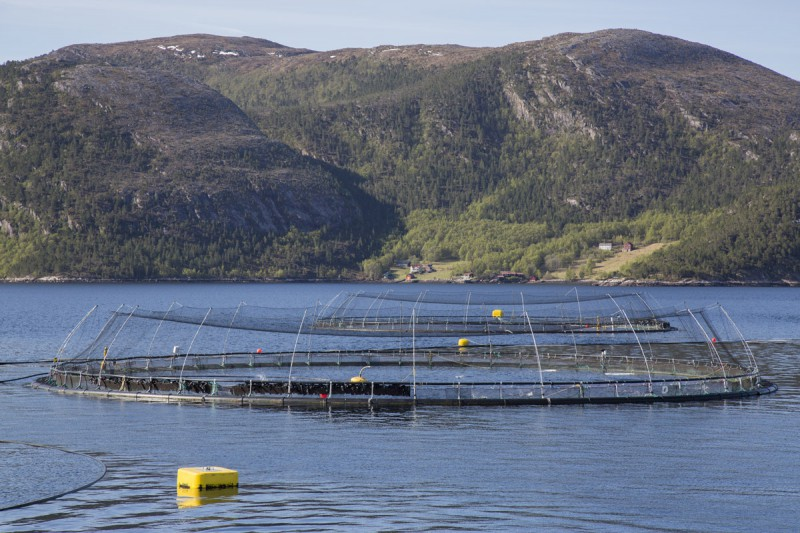 Redes antiave jaulas flotantes