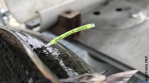 Spaguetti- anchor tag